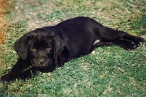 puppyannie